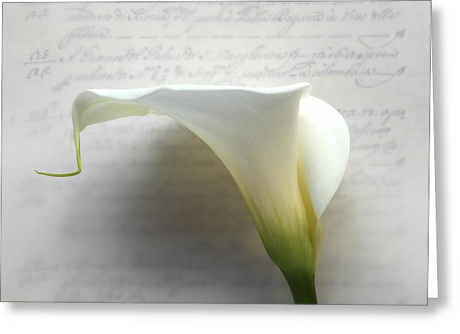 Calla Lily On Old Script Writing Greeting Card by Ruby Hummersmith