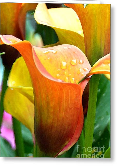 Calla Painting Greeting Card by Pravine Chester