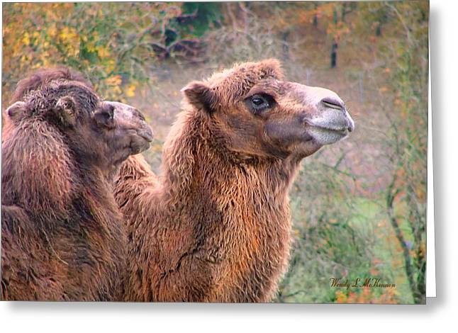 Calm Camels Greeting Card