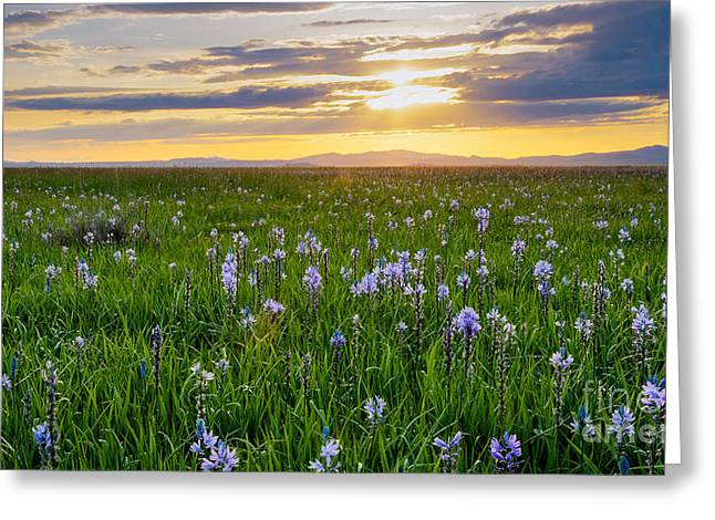 Camas Fields Greeting Card by Idaho Scenic Images Linda Lantzy