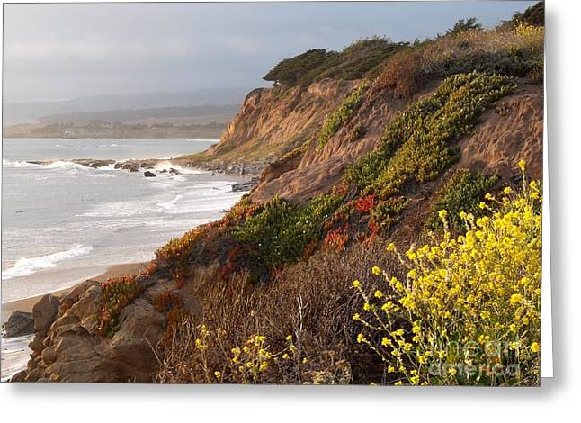 Cambria Ca Greeting Card by Phil Huettner