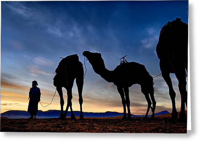 Greeting Card featuring the photograph Camels  by Okan YILMAZ