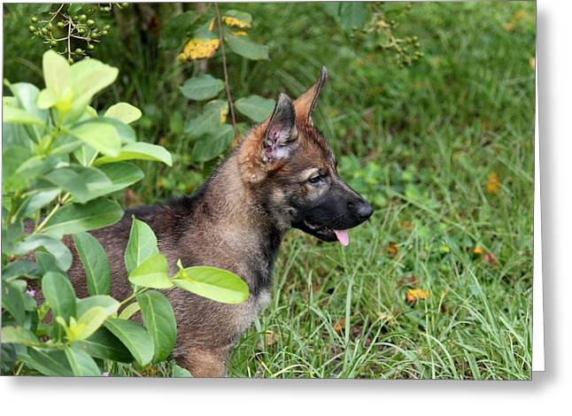 Camouflage Puppy Greeting Card by Christean Ramage