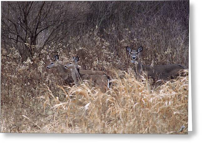 Camouflaged Deer Greeting Card by Christy Woods