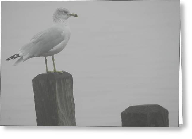 Camouflaged Seagull Greeting Card by Dennis Leatherman