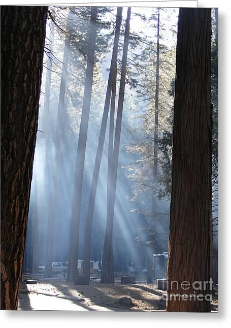 Campfire Smoke Through The Trees Greeting Card