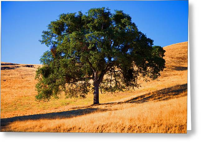 Campo Seco Tree Greeting Card by Joe Fernandez