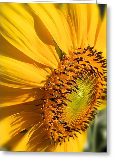 Greeting Card featuring the photograph Can You Say Sunshine by Lynnette Johns