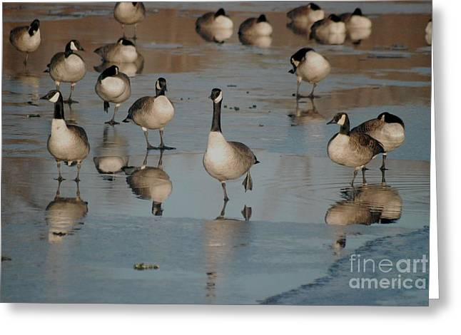 Greeting Card featuring the photograph Canada Geese by Mark McReynolds