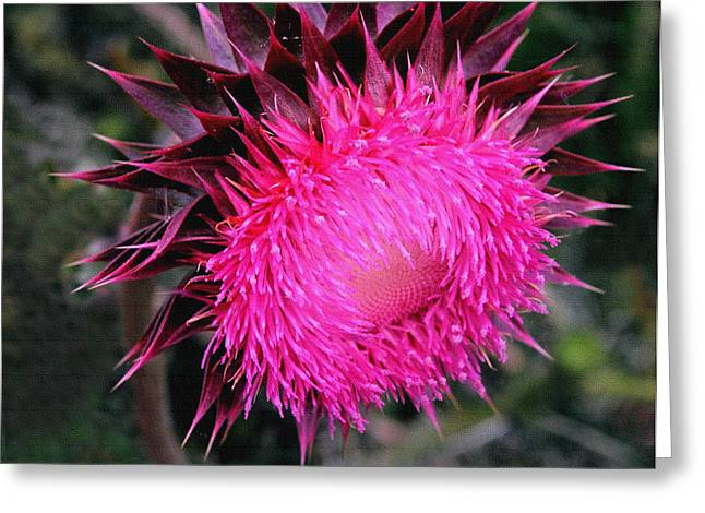 Greeting Card featuring the photograph Canada Thistle by Robert Kernodle