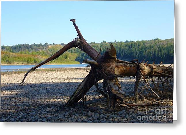 Greeting Card featuring the photograph Canadian Driftwood by Jim Sauchyn