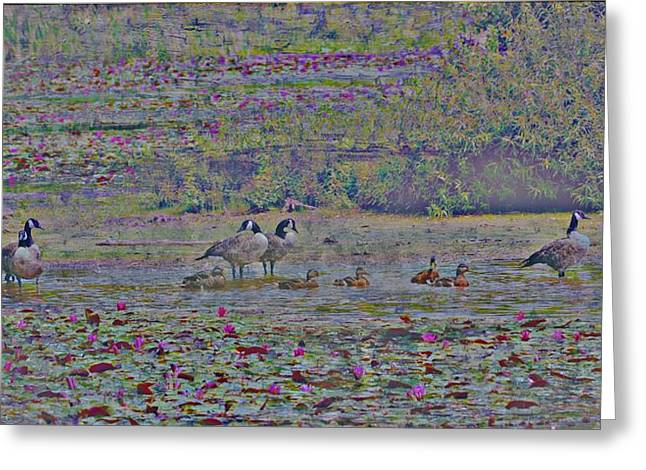 Canadian Geese And Babys Greeting Card