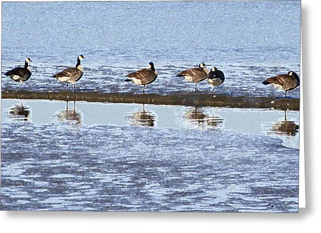 Canadian Geese Line Up Greeting Card by Mary Gaines