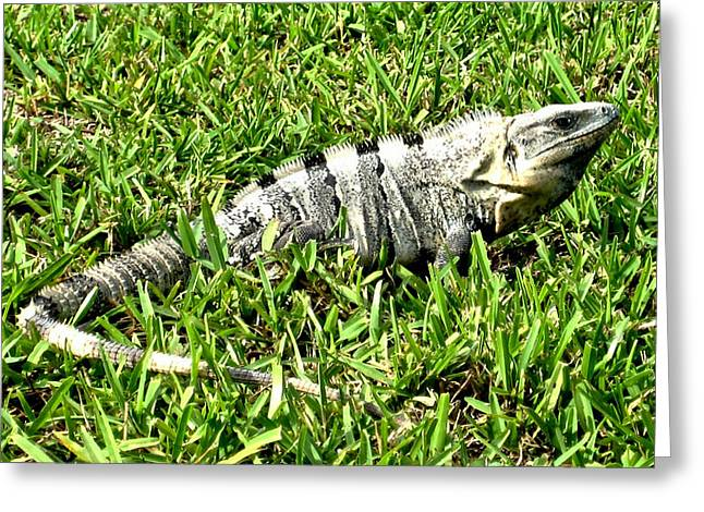 Cancun Eguana Greeting Card