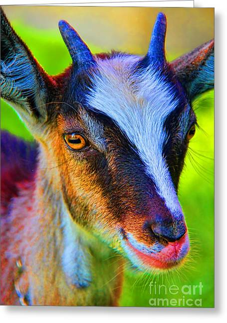 Candy Goat Greeting Card by Mariola Bitner