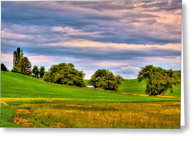 Canola Among The Wheat II Greeting Card by David Patterson