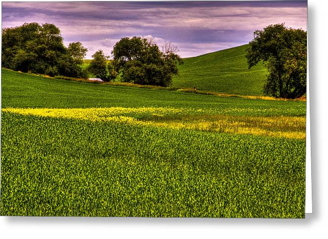 Canola And Wheat Greeting Card by David Patterson