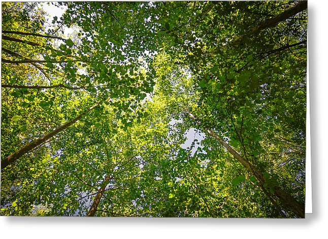 Canopy Greeting Card by Brian Stevens