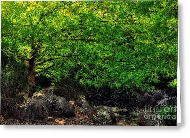 Canopy Of Spring Leaves Greeting Card