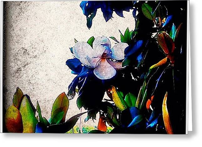 Canvas Magnolia Greeting Card