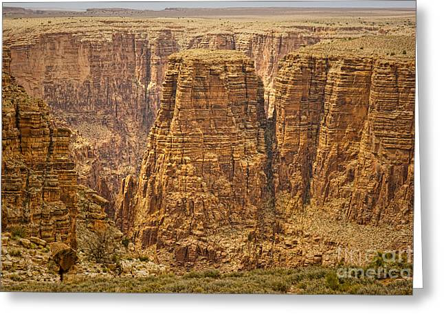 Canyons  Greeting Card by James BO  Insogna