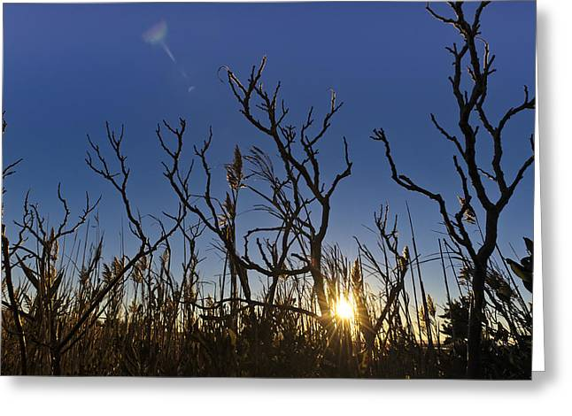 Cape Cod Marsh At Sunset Greeting Card by Marianne Campolongo