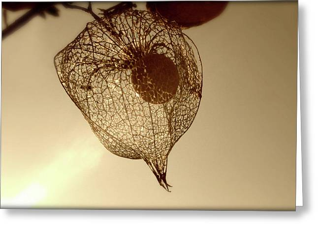 Cape Gooseberry Greeting Card by Emanuel Tanjala