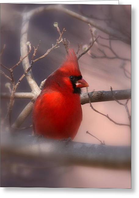 Travis Truelove Photography Greeting Cards - Cardinal - Unafraid Greeting Card by Travis Truelove