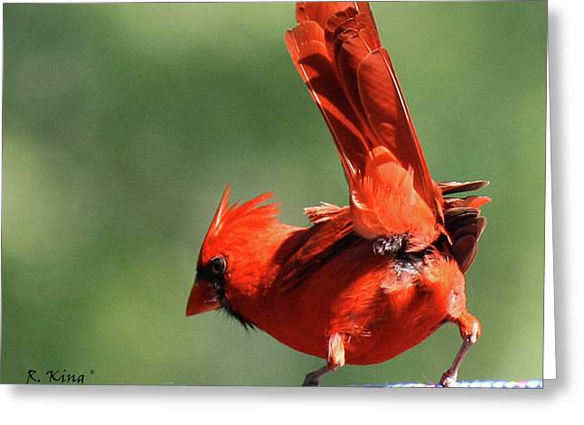 Cardinal-a Picture Is Worth A Thousand Words Greeting Card by Roena King