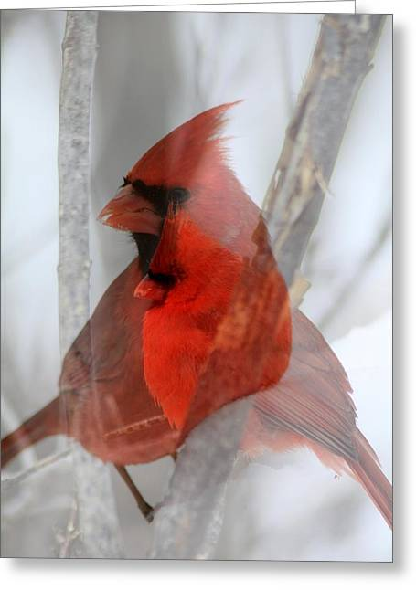 Cardinal Collage Greeting Card by Rick Rauzi