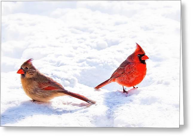 Cardinal Couple Greeting Card by Tamyra Ayles