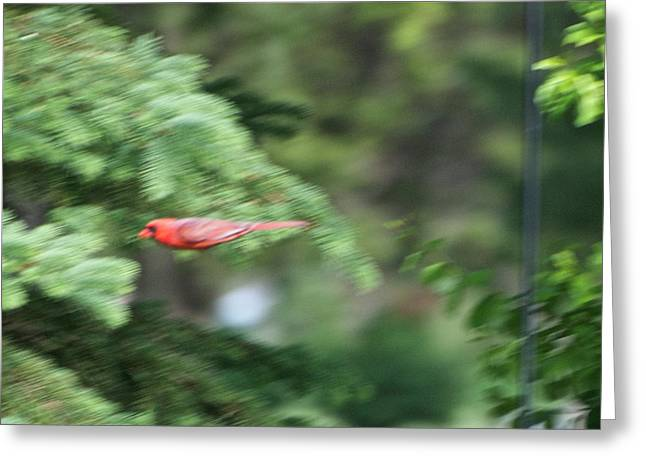 Greeting Card featuring the photograph Cardinal In Flight by Thomas Woolworth