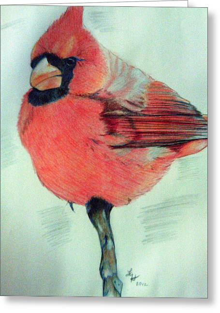 Cardinal Study Greeting Card