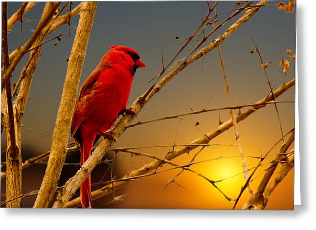 Cardinal Sunrise Greeting Card by Barry Jones