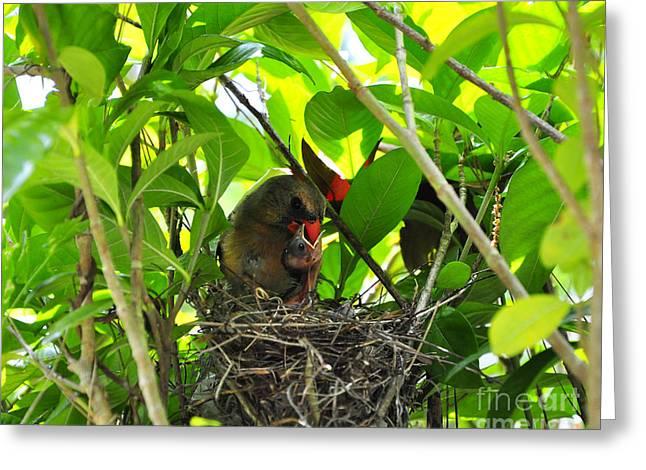 Cardinals Caterpillars Greeting Card by Al Powell Photography USA