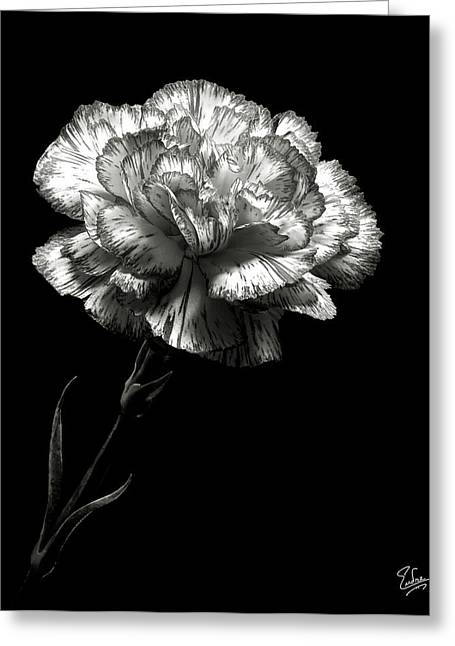 Carnation In Black And White Greeting Card