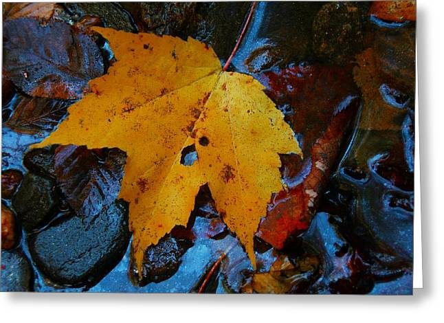 Carolina Blue Reflections Greeting Card by Christine Annas