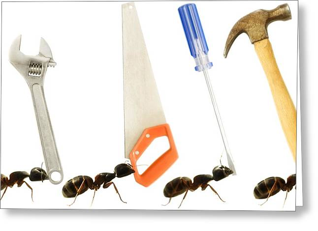 Carpenter Ants Camponotus Pennsylvanicus Greeting Card by Chris Knorr