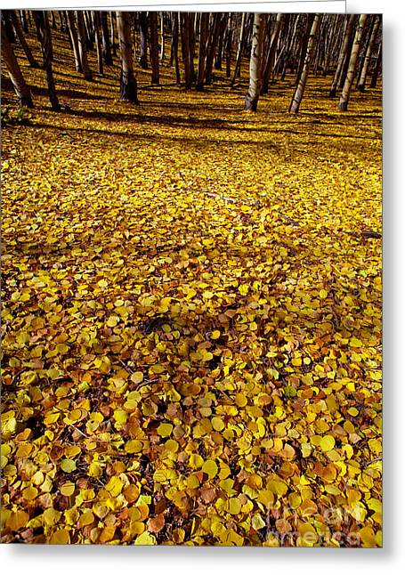 Carpet Of Aspen Leaves Greeting Card