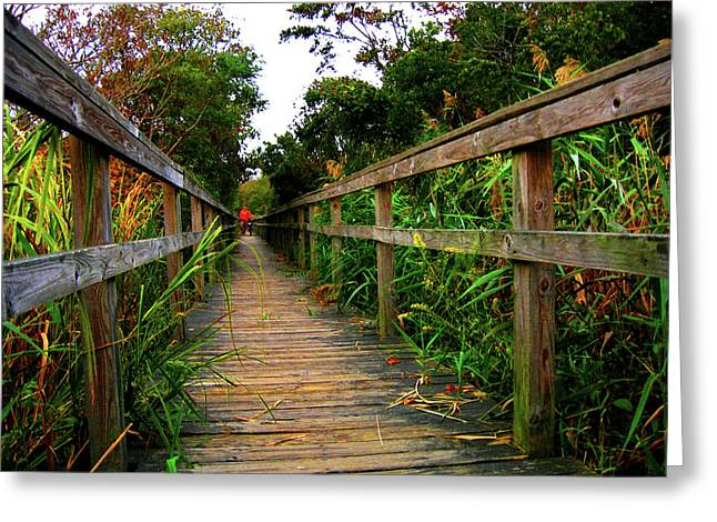 Carrituck Perspective Greeting Card by Ed Golden