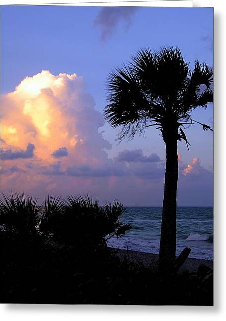 Casperson Beach Sunrise With Palm Greeting Card