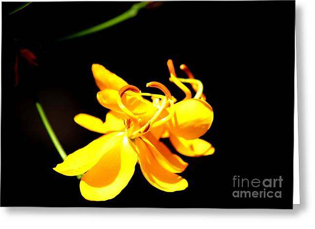 Cassia Blossom Greeting Card by Theresa Willingham