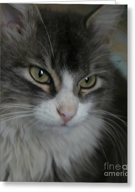 cat Greeting Card by Alisa Tek