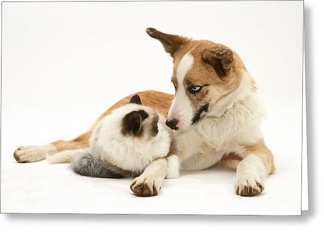 Cat And Dog Greeting Card by Jane Burton