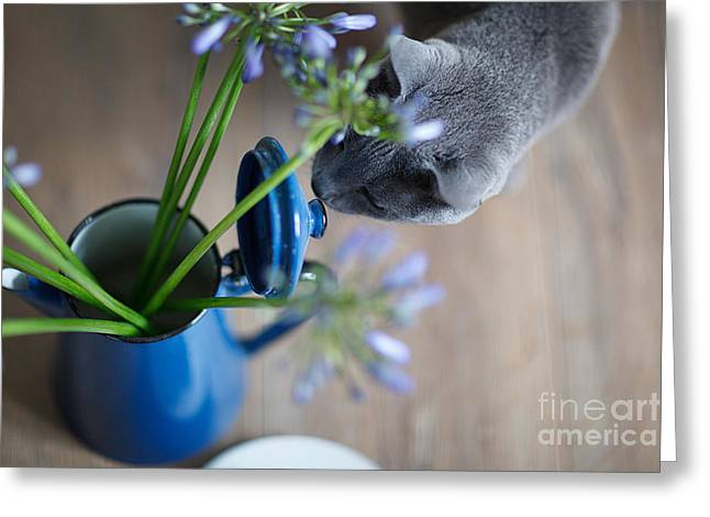 Cat And Flowers Greeting Card by Nailia Schwarz