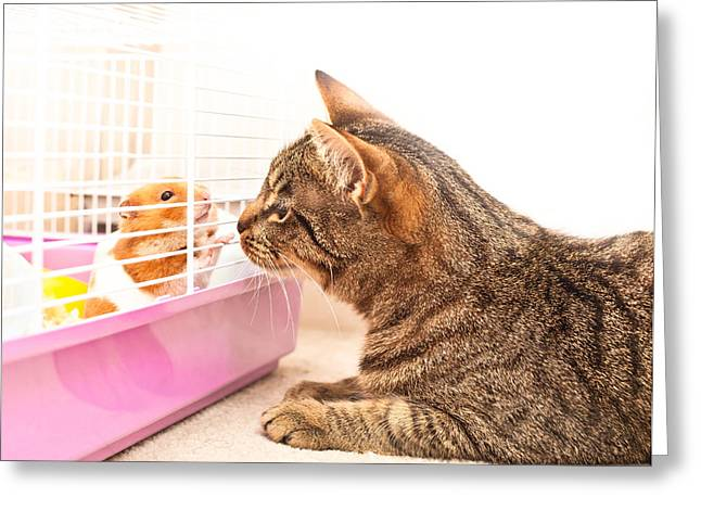 Cat And Hamster Greeting Card