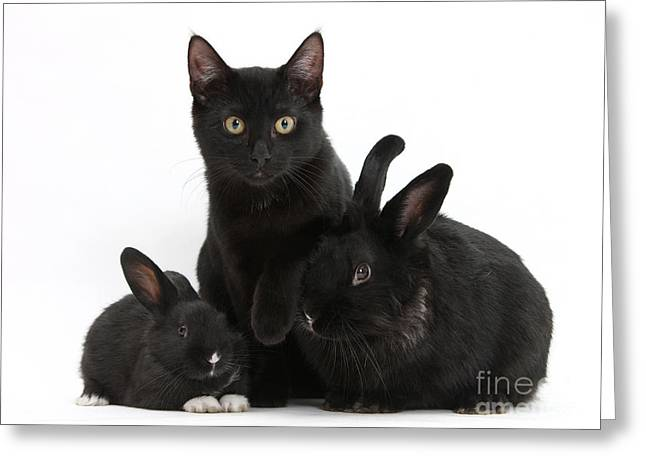 Cat And Rabbits Greeting Card by Mark Taylor
