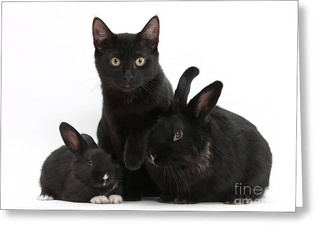Cat And Rabbits Greeting Card by Mark Taylor