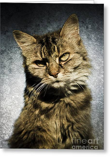 Cat Asks Question Greeting Card by David Lade
