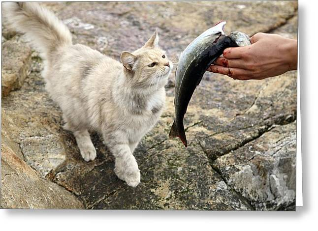 Cat Being Fed A Fish Greeting Card by Bjorn Svensson